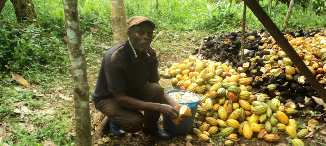 Farmers are Increasing their Livelihood Security and Conserving Forests in the Ituri Forest of the Democratic Republic of Congo (DRC)